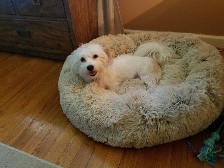 Warmewolke™ - Hundebett photo review